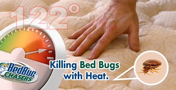 Automobile Bed Bug Treatment , Get Rid of Bed Bugs in my Car , Get Rid of Bed Bugs in my Truck , Get Rid of Bed Bugs in my Tractor Trailer , Get Rid of Bed Bugs in my Van , Get Rid of Bed Bugs , Get Rid of Bed Bugs Staten Island , Truck Bed Bug Treatment , Tractor Trailer Bed Bug Treatment