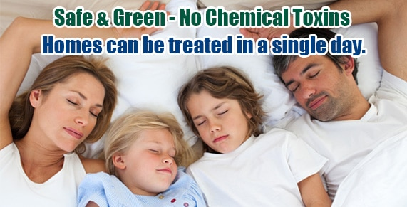 Chemical Free Staten Island Bed Bug Treatment , Chemical Free Bed Bug Treatment Staten Island , Chemical Free Bed Bug Treatment NY , Bed Bug Spray Staten Island , Bed Bug Spray NY , Kill Bed Bugs Staten Island , Kill Bed Bugs NY
