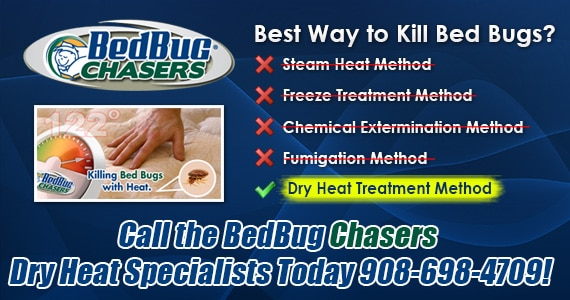 Non-toxic Bed Bug treatment Staten Island, bugs in bed Staten Island, kill Bed Bugs Staten Island
