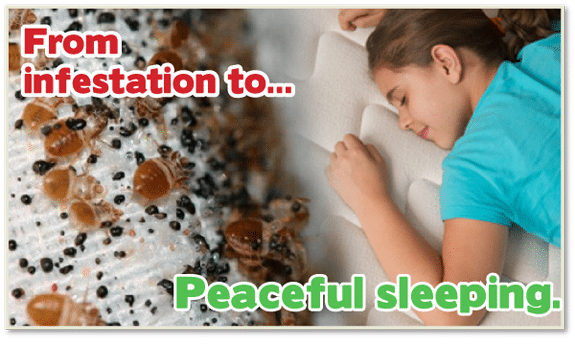 KILL Bed Bugs Staten Island , Kill Bed Bugs NYC , Chemical Free Bed Bug Treatment Staten Island , Chemical Free Bed Bug Treatment NYC , Bed Bug Treatment Staten Island , Bed Bug Treatment NYC ,Bed Bug Exterminator Staten Island , Bed Bug Exterminator NYC